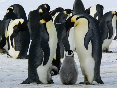 The difference between interested and interesting. These penguins look interesting.